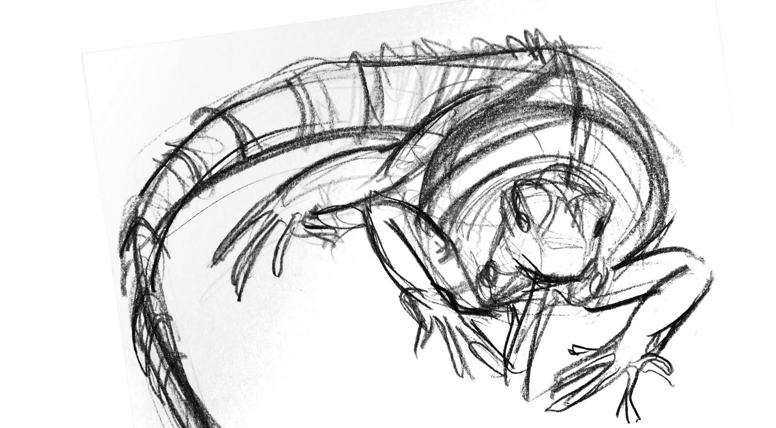 1600x882 Rasoul T Zarrin Iguana Drawing