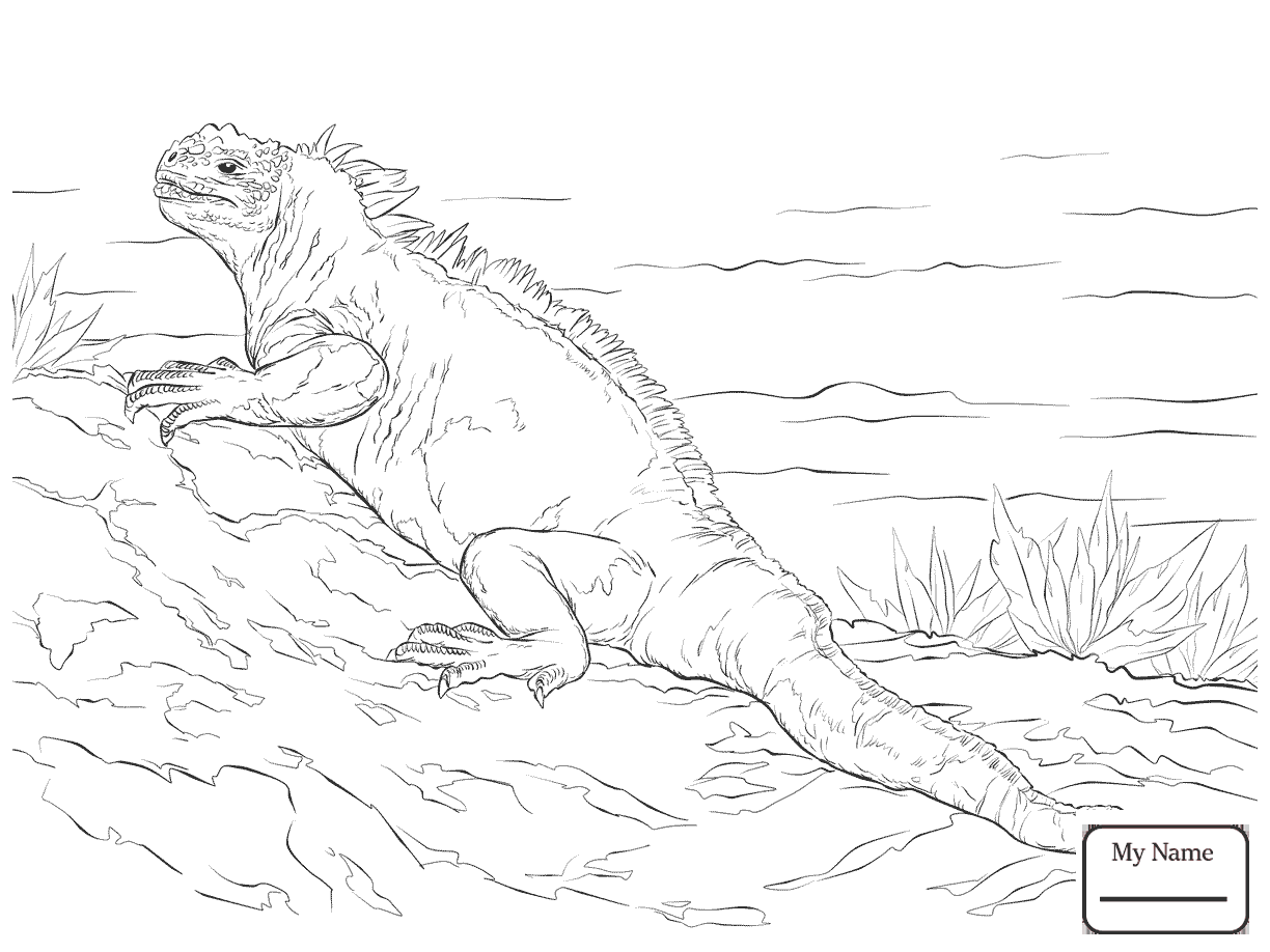 1224x918 Coloring Pages For Kids Reptiles Green Iguana Iguana