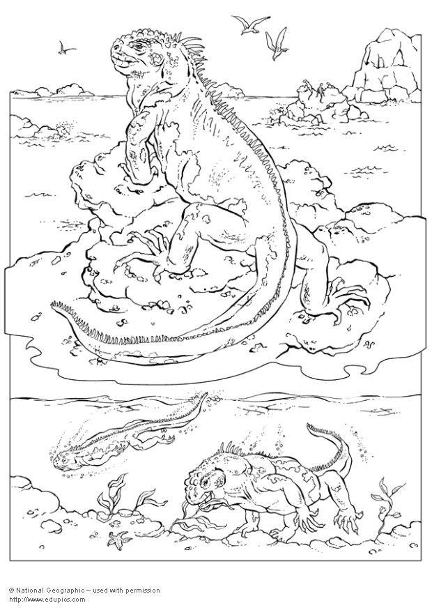620x875 Coloring Page Iguana
