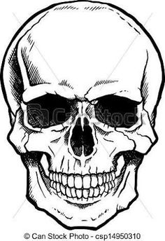 236x344 Vector Black And White Illustration Of Human Skull With A Lower
