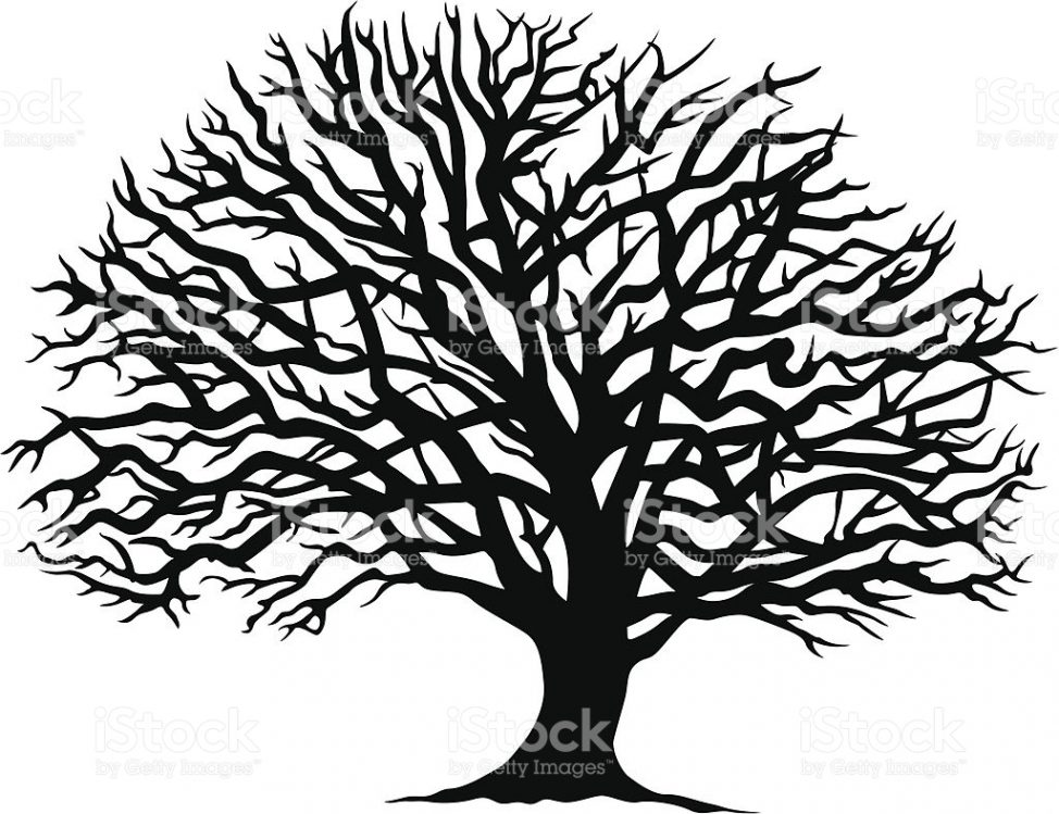 974x749 Coloring Pages Decorative Oak Tree Line Drawing Illustration