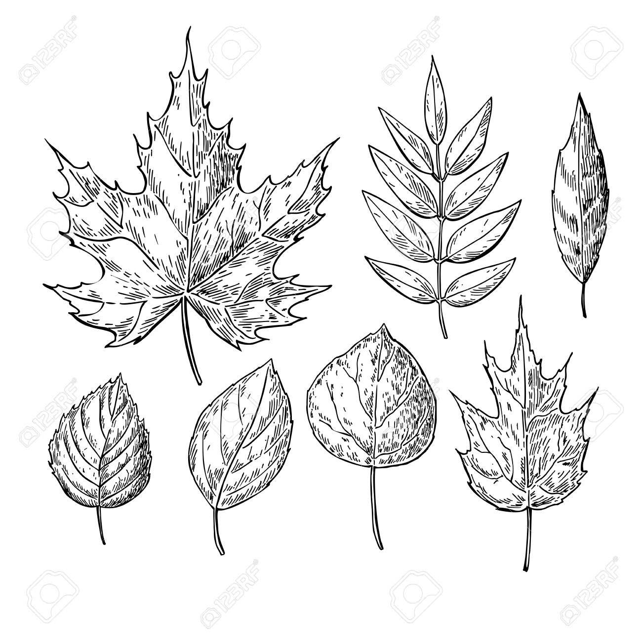 1300x1300 Vector Autumn Drawing Leaves Set. Isolated Objects. Hand Drawn