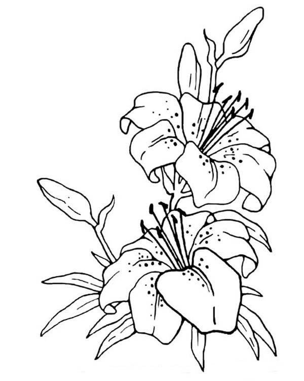 600x750 Flower Drawing Coloring Page