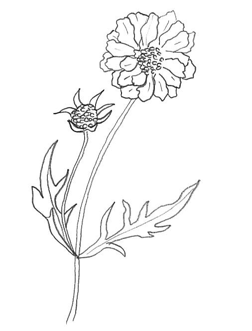 506x664 Flower Sketches