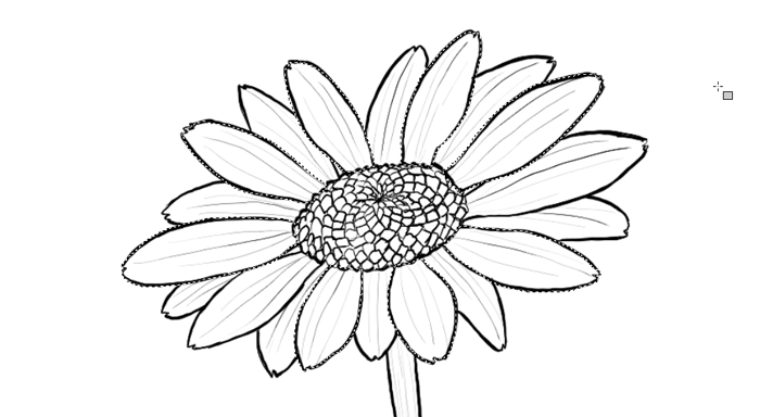700x384 How To Draw Flowers The Innocent And Cheerful Daisy