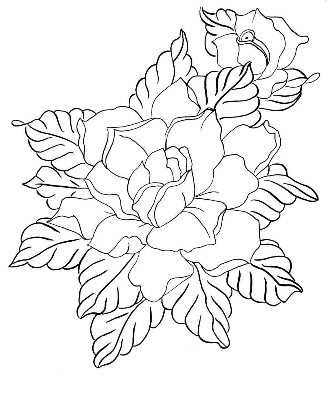 1055x1264 The Images Collection Of Download Flower Drawing How To Draw