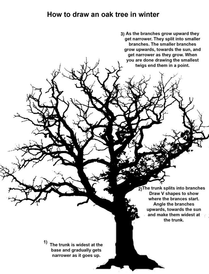 736x963 Coloring Pages Exquisite Oak Tree Line Drawing Coloring Pages