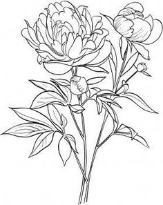 236x297 Peony Flower Line Drawing Sketch Coloring Page