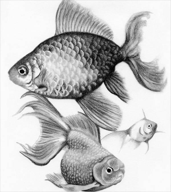 600x672 Fish Drawings Free Amp Premium Templates