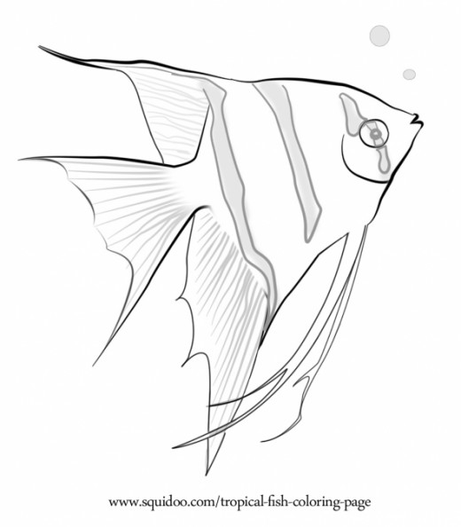 520x594 Best Photos Of Tropical Fish Drawings