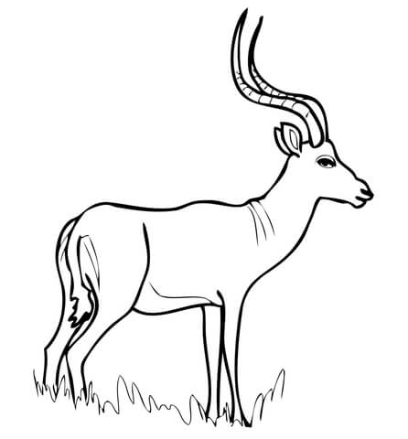 446x480 African Antelope Impala Coloring Page Free Printable Coloring Pages