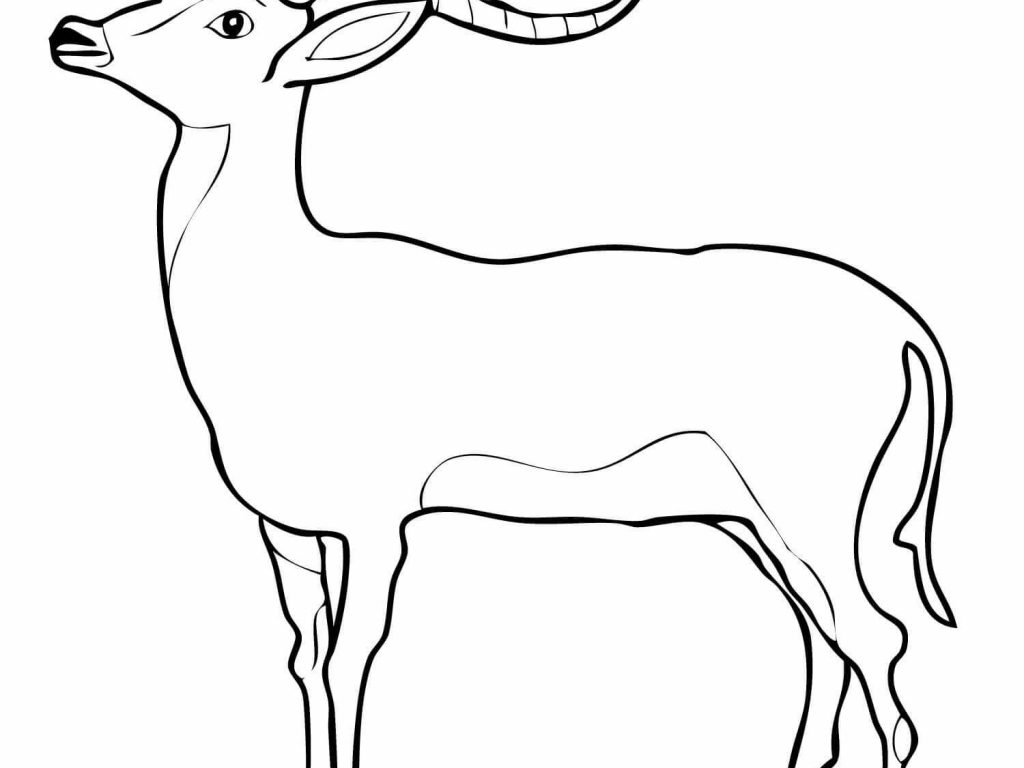 1024x768 Download Kudu Animal Coloring Pages