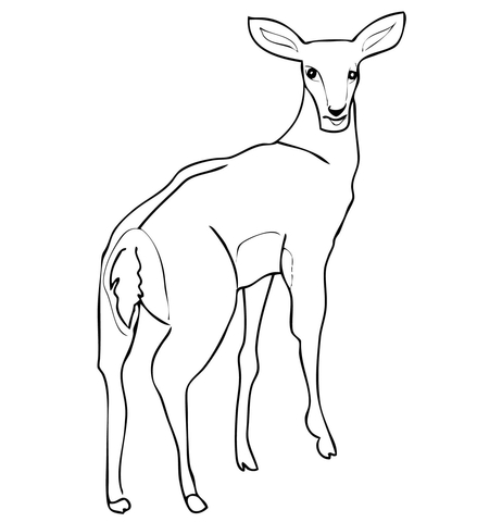 439x480 Female Impala Antelope Coloring Page Free Printable Coloring Pages