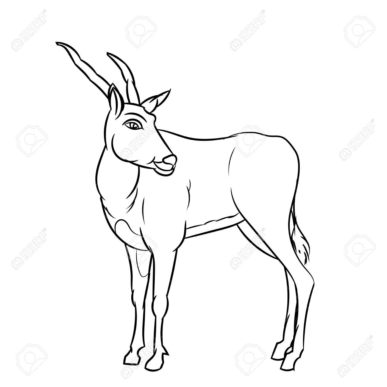 1300x1300 Hand Drawn Sketch Of Impala Deer Cartoon Isolated, Black
