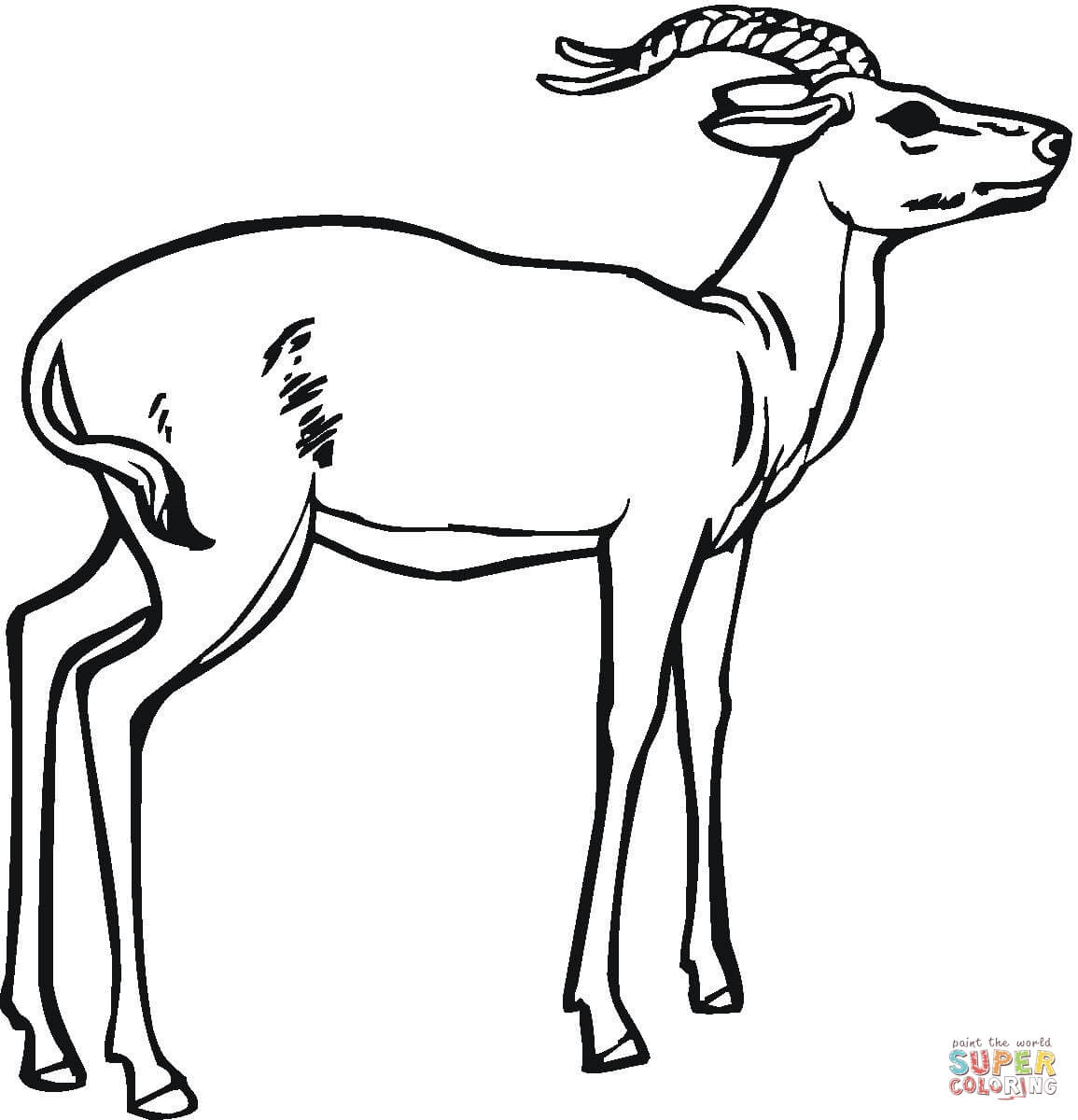 1155x1200 Impala Coloring Page Free Printable Coloring Pages