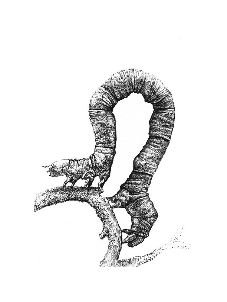 750x1000 Pen And Ink Inch Worm, Drawing A Line Dress By Carabevan Redbubble