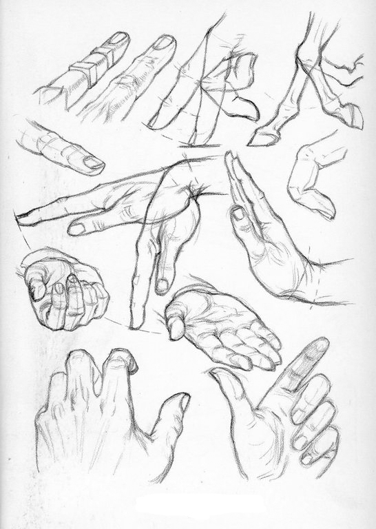 546x768 Drawings Body Parts