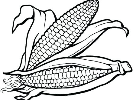 440x330 Ideas Indian Corn Coloring Page For 38 Thanksgiving Indian Corn