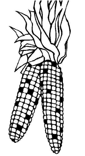 346x638 Indian Corn Coloring Page Coloring Page Applique Patterns