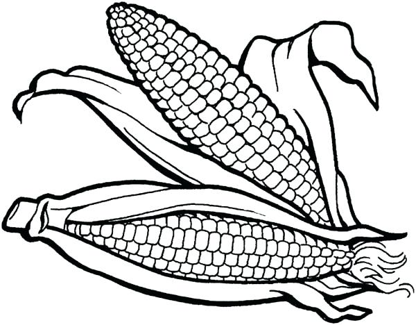 600x468 Indian Corn Coloring Page 3849