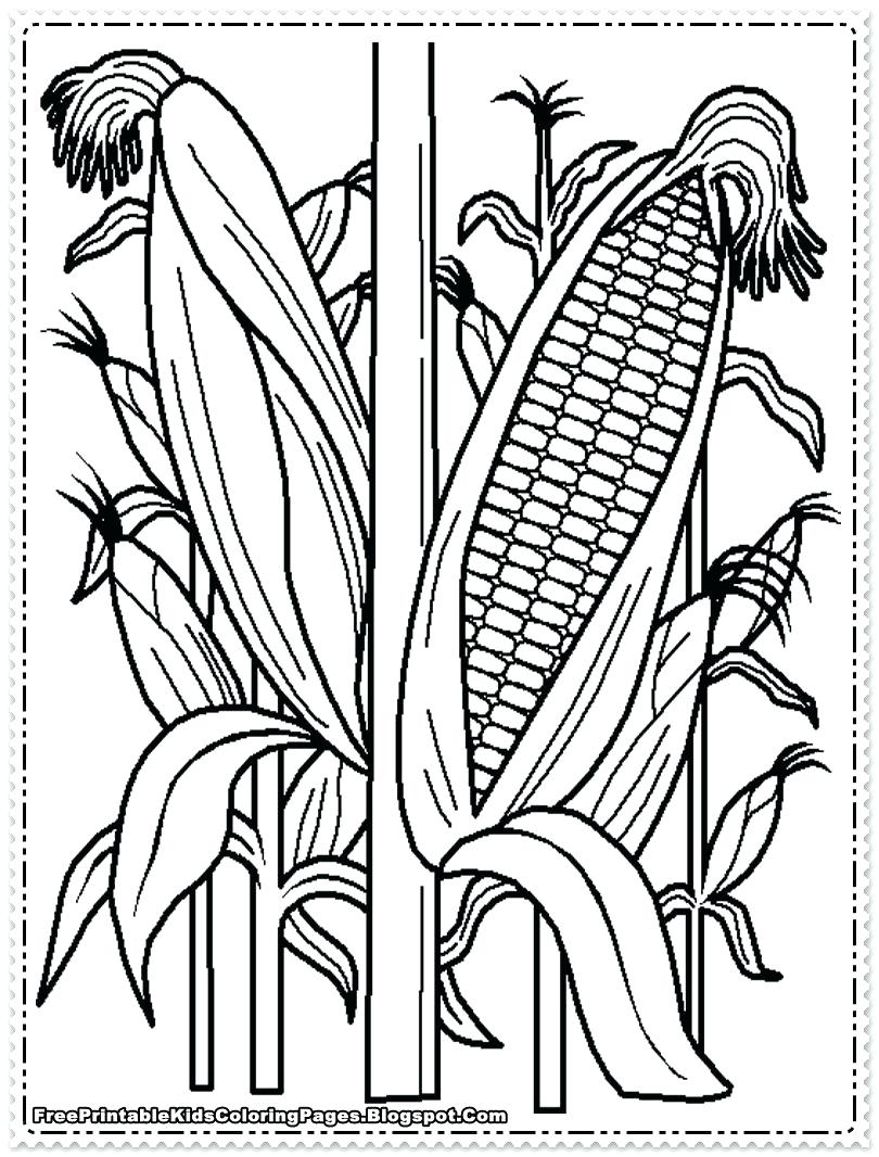 810x1066 Coloring Indian Corn Coloring Pages Great Candy Page On