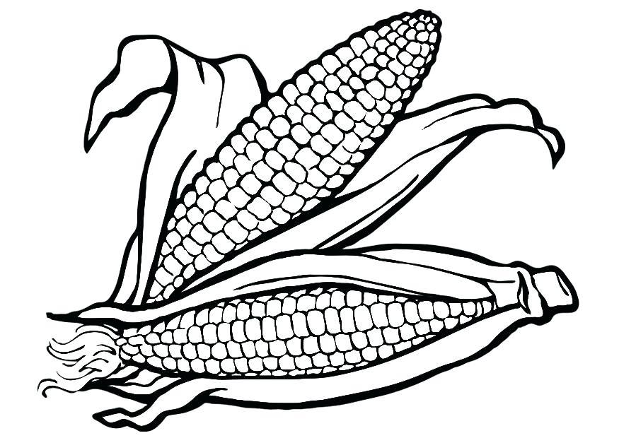 875x620 Indian Corn Coloring Page