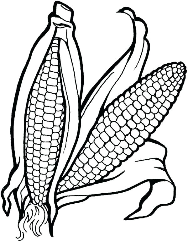 600x770 Corn Coloring Page Sweet Corn Coloring Page Indian Corn Coloring