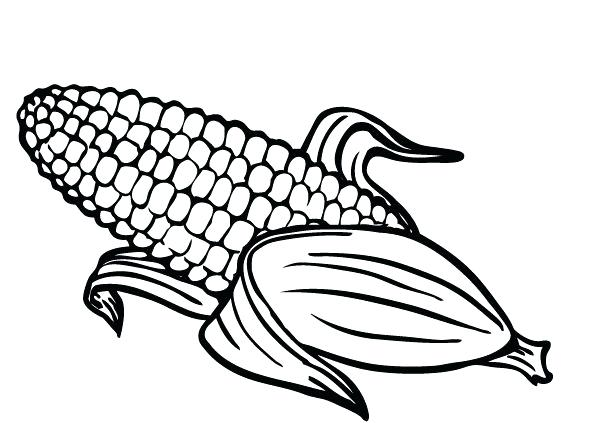 593x423 Corn Coloring Pages Printable Corn Coloring Pages Printable Free