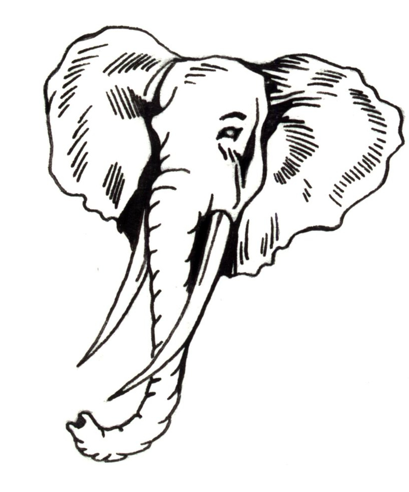 814x981 Elephant Face Drawing