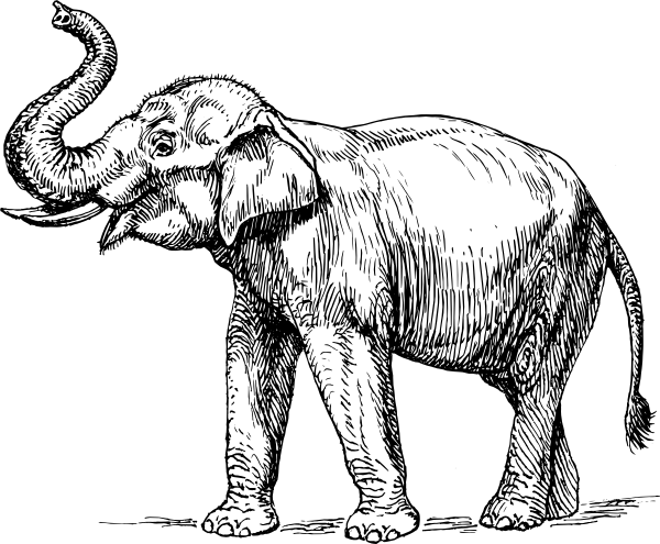 600x495 Indian Elephant Clip Art