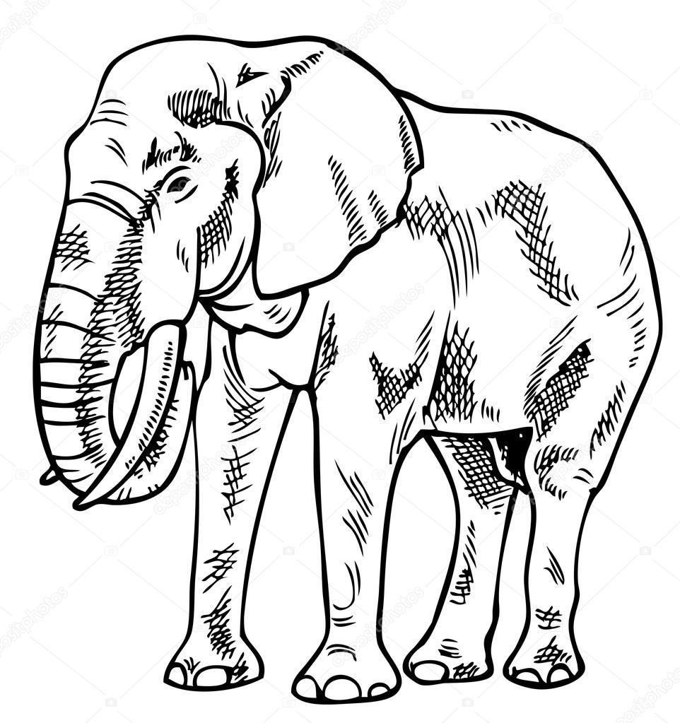 962x1023 Elephant Drawing Stock Vector Olga1983siv1