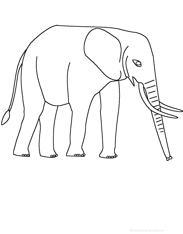 Indian Elephant Line Drawing