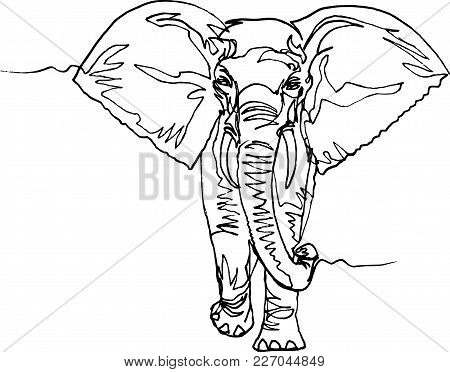450x372 Front View Elephant Images, Illustrations, Vectors