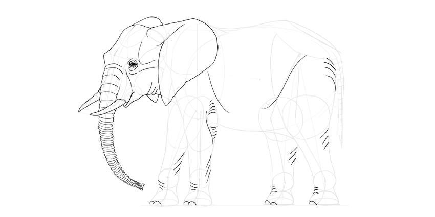850x425 How To Draw An Elephant Step By Step