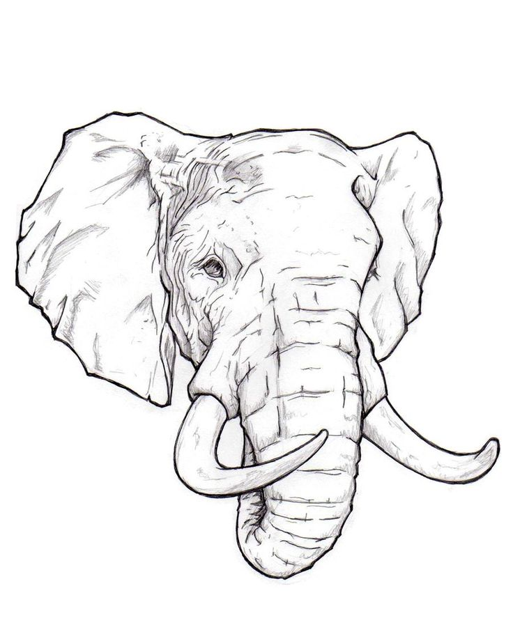 736x920 Coloring Pages Elephant Drawing Image Elephant Image Line