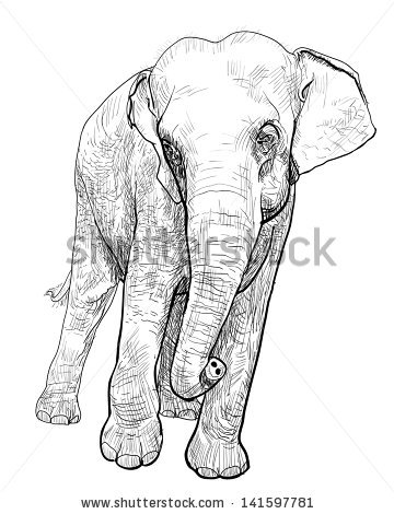 360x470 Drawn Asian Elephant