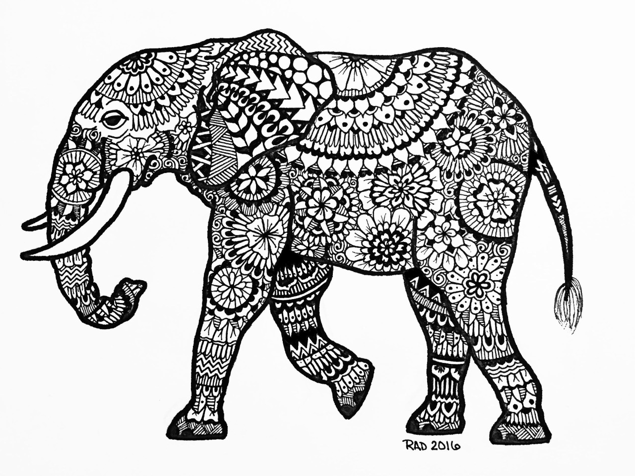 Indian Elephant Line Drawing at GetDrawings.com | Free for personal ...