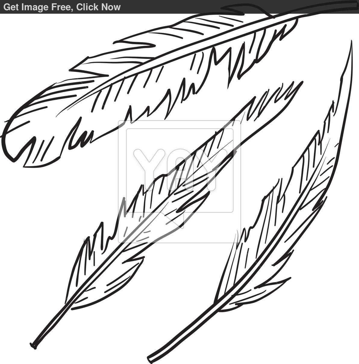 1192x1210 6 Indian Feather Vector Images