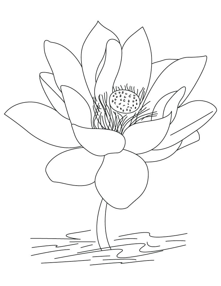 738x954 Trend India Coloring Pages New