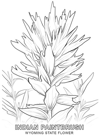 340x480 Wyoming State Flower Coloring Page Free Printable Coloring Pages