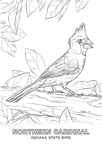 340x480 Indiana State Bird Coloring Page Free Printable Coloring Pages