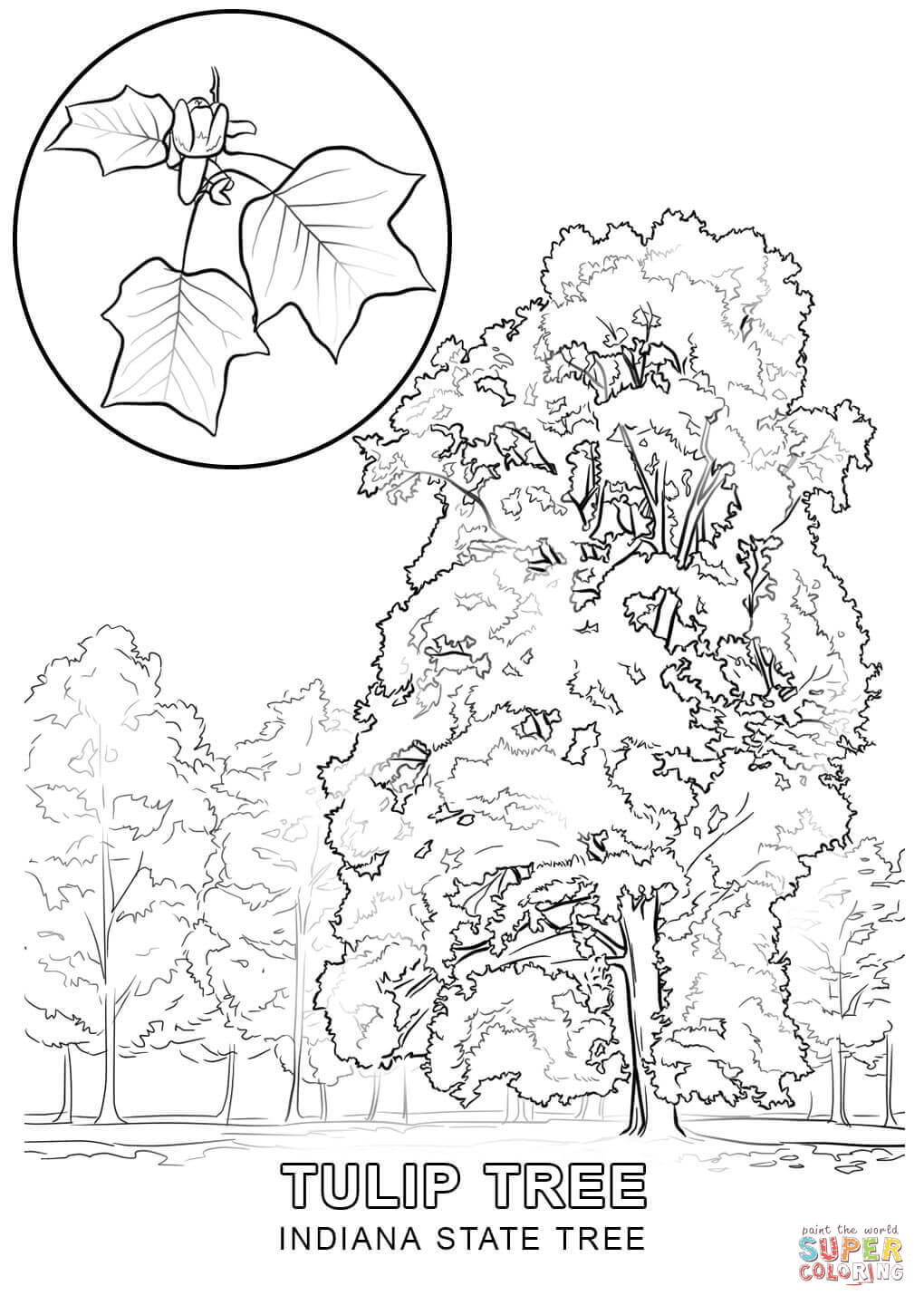 1020x1440 Indiana State Tree Coloring Page Free Printable Coloring Pages