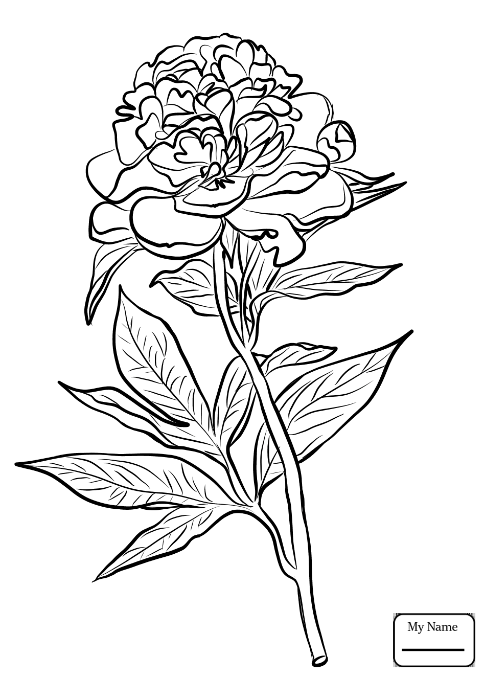 947x1326 Cardinal And Peony Indiana Flower And Bird Flowers Coloring Pages