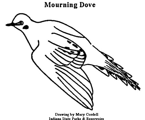 500x415 Dnr Coloring Pages