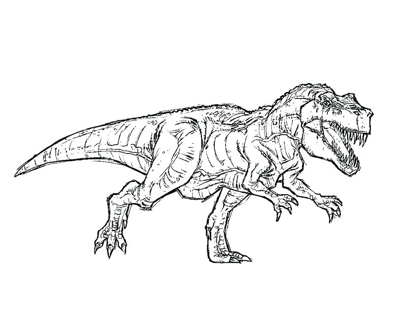 800x667 t rex coloring page tyrannosaurus coloring page pics of park - T Rex Coloring Pages