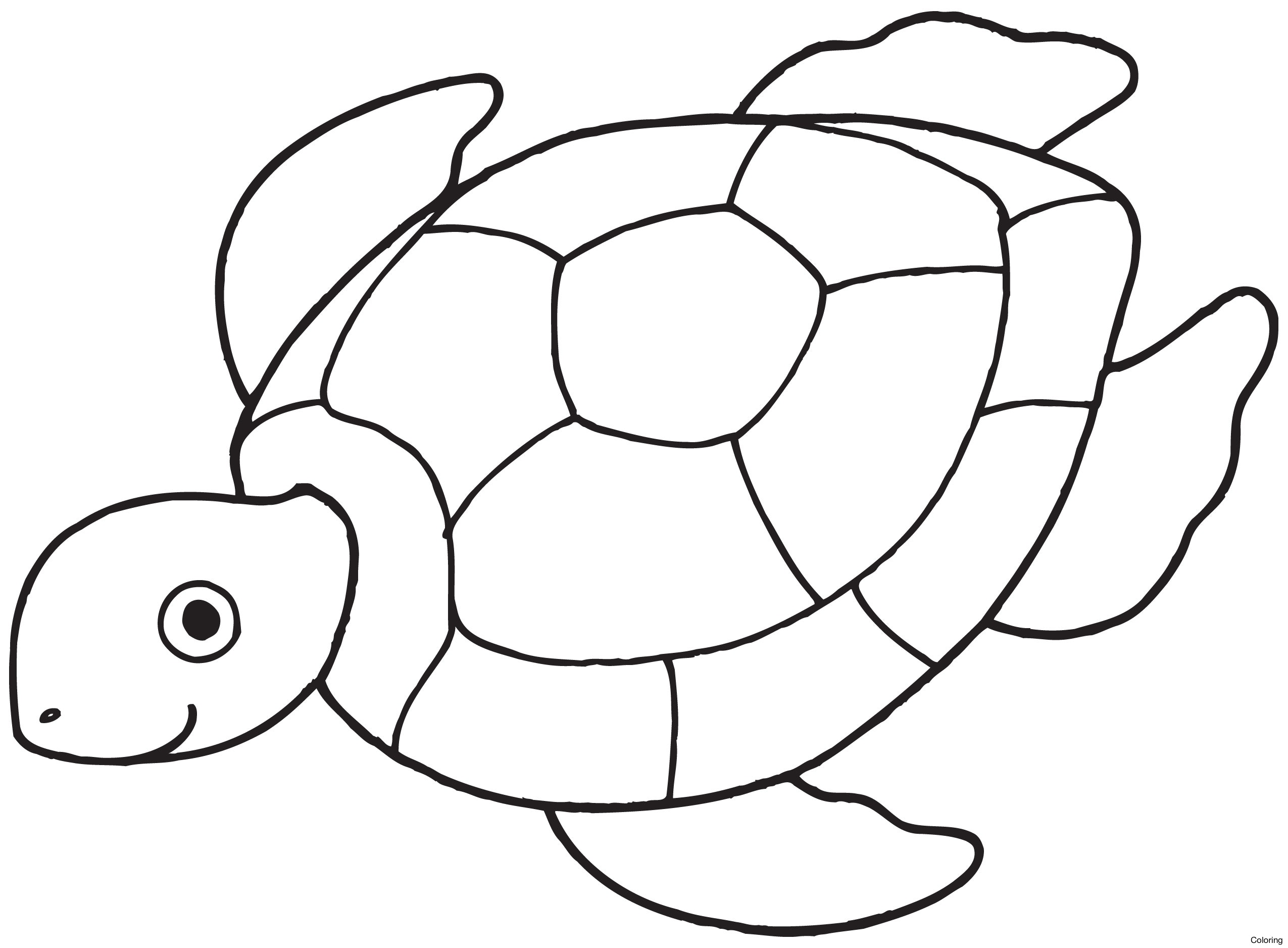 2550x1876 Simple Turtle Drawing 1000 Images About Drawings