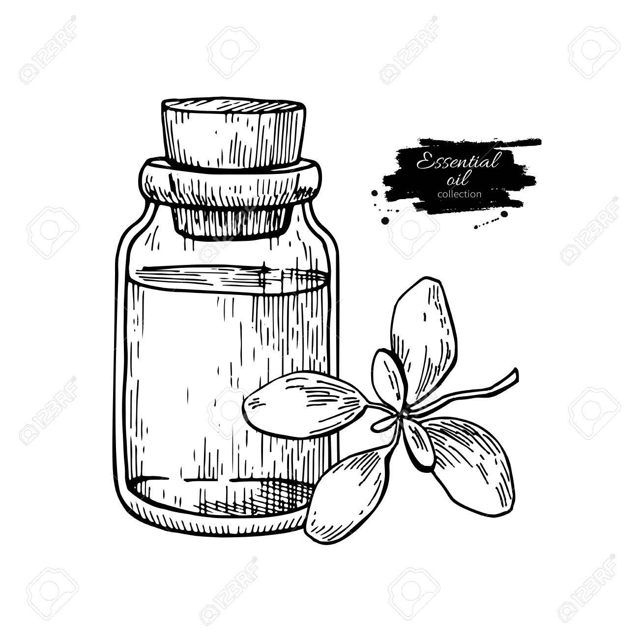 1300x1300 Marjoram Essential Oil Bottle And Marjoram Leaves Hand Drawn
