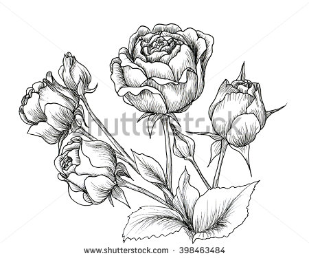 450x375 Highly Detailed Hand Drawn Roses Isolated On White. Hand Drawn