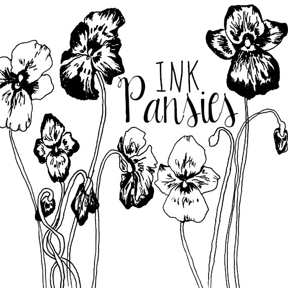 570x570 Ink Drawing Pansy Flower Clipart Flowers Clip Art Digital