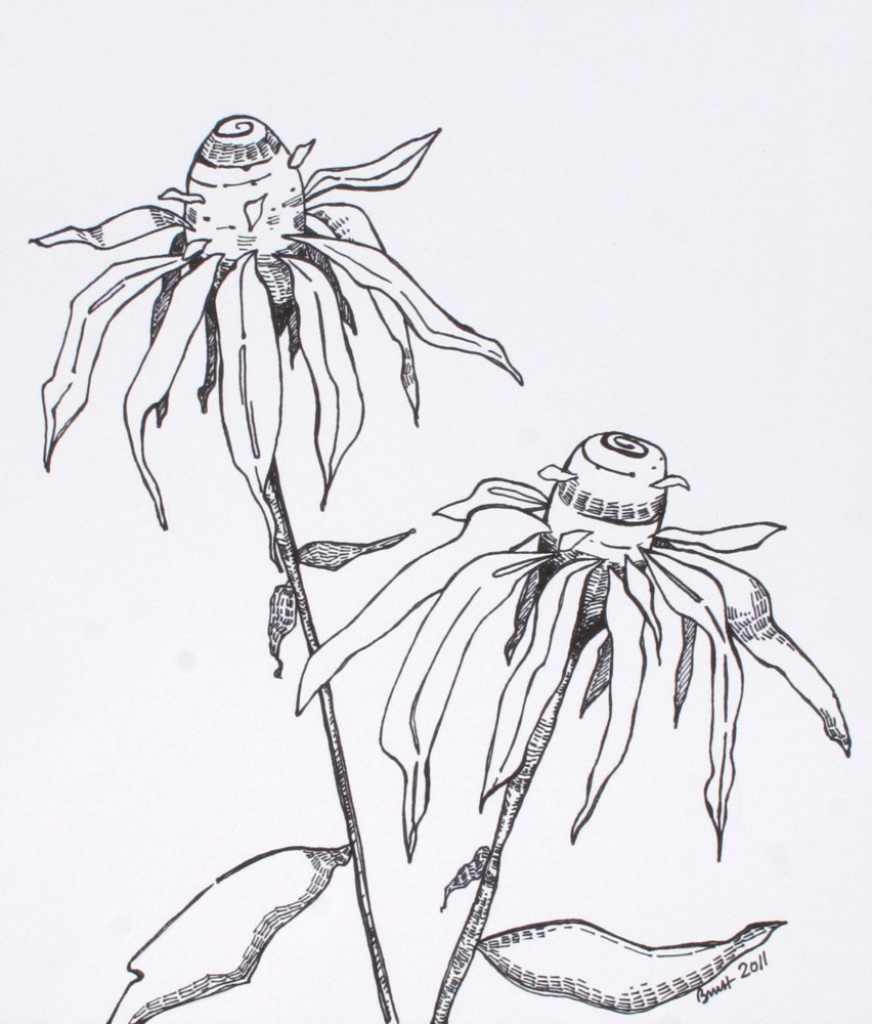 872x1024 Pen And Ink Drawings Of Flowers Cone Flowers
